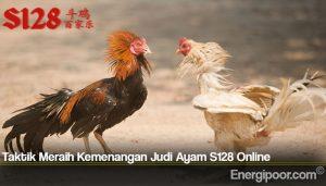 Taktik Meraih Kemenangan Judi Ayam S128 Online